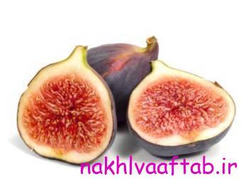 http://nakhlvaaftab.ir/wp-content/uploads/2015/07/4676_635110459887988289_l.jpg