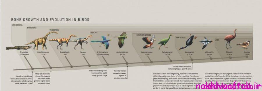 دایناسورها چگونه به پرنده تبدیل شدند؟