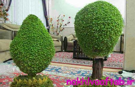 درست کردن سبزه به شکل درخت