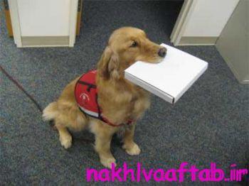 داستان سگ و قصاب
