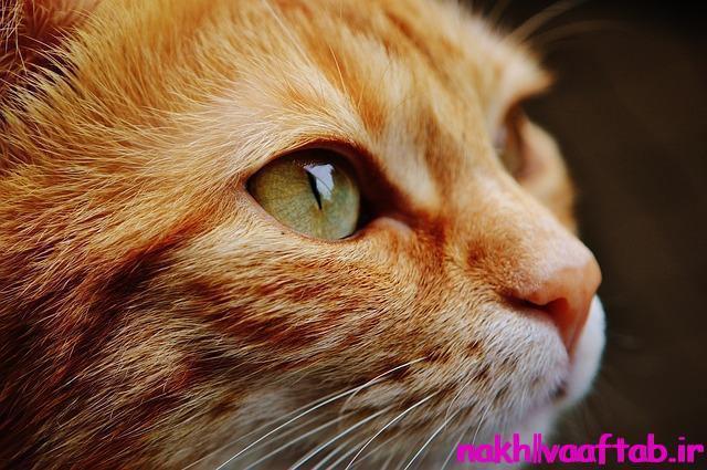 سیستم ایمنی,درمان سرطان تخمدان,درمان سرطان,مبارزه با سرطان,سرطان تخمدان,تخمدان,اسکیزوفرنی,مدفوع,گربه,مدفوع گربه,انگل