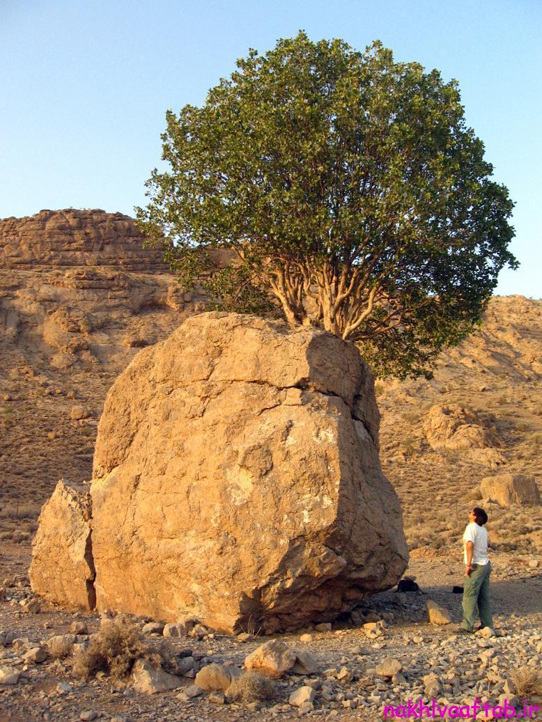 مروارید سبز، در ارسنجان,شهرستان ارسنجان,ارسنجان,جنگل ارسنجان,دانشگاه ارسنجان,فارس,طبیعت,جاهای دیدنی