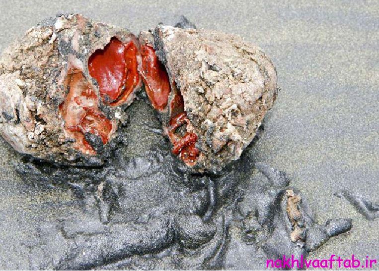 سنگ های زنده ای که خوردنی هستند!